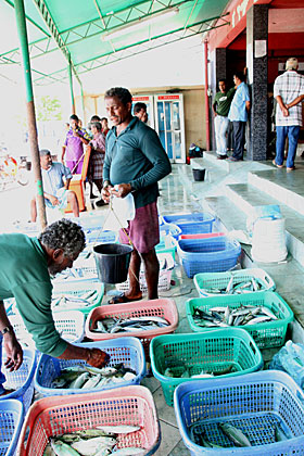 Male' Fish Market local fishermen selling fish '