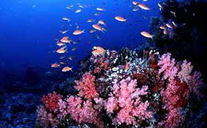 Corals and Fish, sea is their home